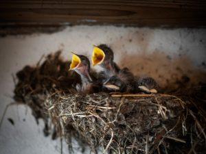 Vogels op en onder het dak